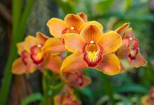 come mantenere le orchidee in appartamento