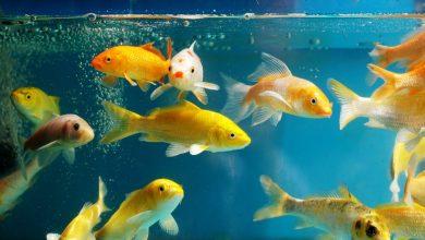come scegliere un acquario